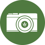 feature-image-cannabis-photography