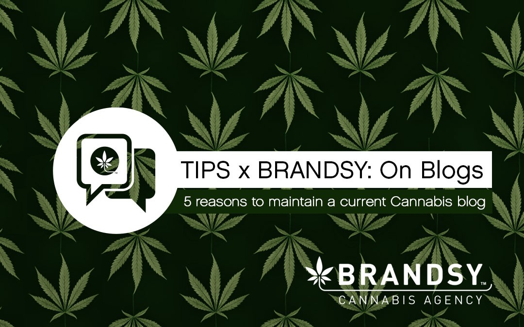 5 reasons to maintain a current Cannabis blog